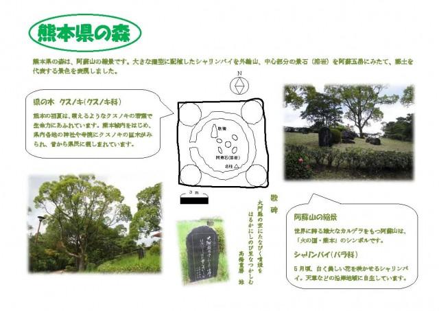 熊本県の森